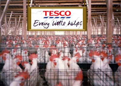 Battery Farming Tesco