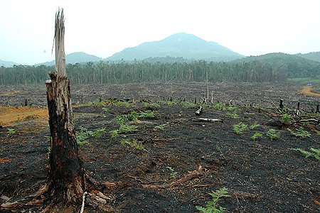 Palm Oil Forest Fire