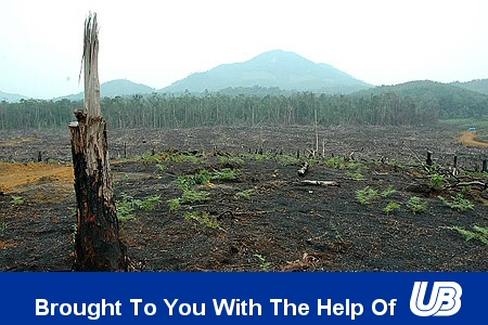 UB Helping Destroy Rainforests